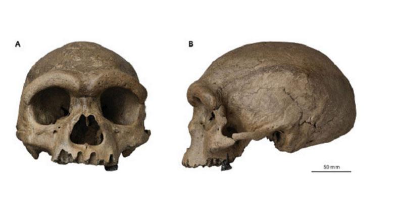 龙人头骨化石